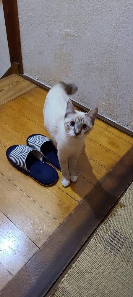 ゲストハウス屋島のアイドル お遍路猫